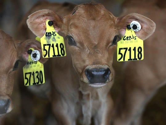 Farm antibiotics