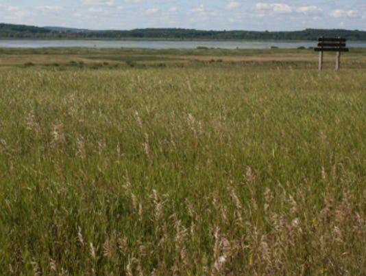 636674284052729948-grand-river-marsh.jpg