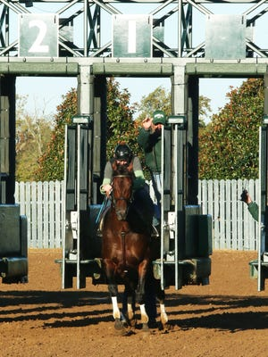 Runhappy broke out of the gate for a workout at Keeneland Wednesday morning.