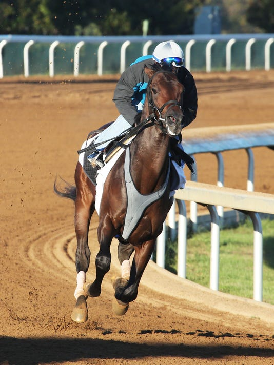 Greenpointcrusader - Morning Workout - Keeneland Race Course - 1
