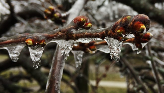 A weekend ice storm coated trees and buildings with ice, flooded freeways, brought down power lines and knocked out power to about 390,000 homes and businesses statewide Sunday.