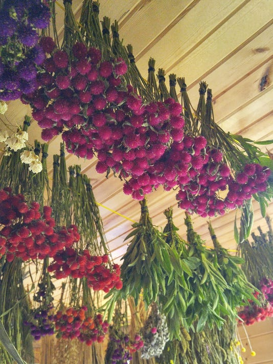 Dried flowers preserve their beauty all year