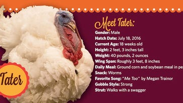 Americans are asked to decide which Iowa turkey gets the presidential pardon.