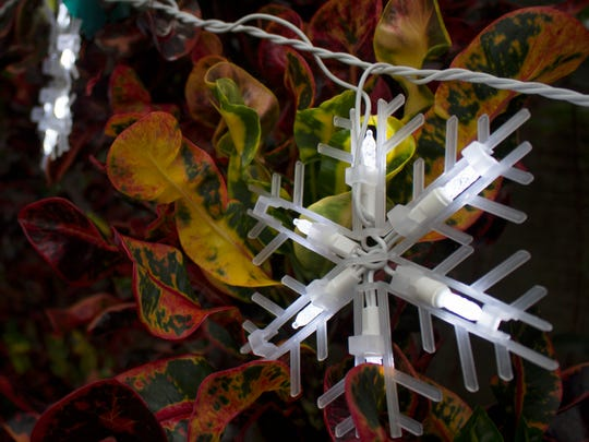 Snowflake dangle over the mammy crotons in Phyllis and Larry McCommon's Naples backyard.