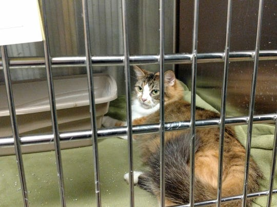 One of the 18 cats brought back to Livonia by Tailwaggers