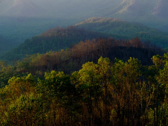 Trees burned in the November 2016 wildfires are seen behind healthy trees in the Smoky Mountains during sunrise in Gatlinburg, Tennessee on Wednesday, May 17, 2017.