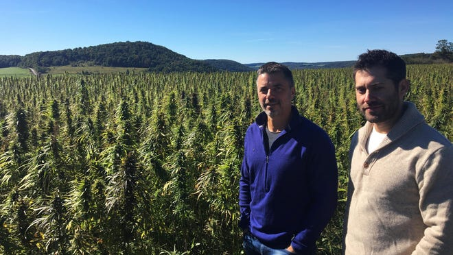 Mark Justh, left, and Dan Dolgin stand beside a field of industrial hemp on their JD Farms in Eaton in this September photo.