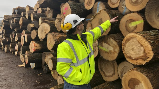 Tom Gerow of Wagner Companies inspects ash logs at its mill in N.Y.