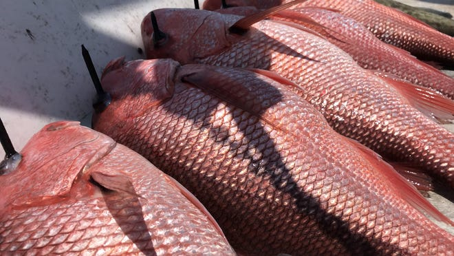 A weekend of red snapper fishing will run Friday through Monday in Louisiana.