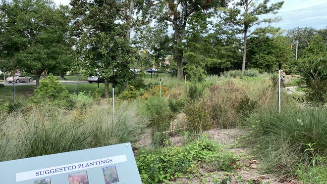 The Arboretum's Stormwater Infiltration Zone is design as a meadow of native and nativar plants.