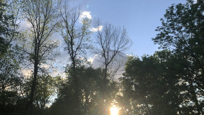 Expect lots of sun today, even if it's hiding behind the trees.