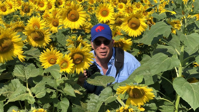 A playful Jim McLaughlin gets up close and personal with the sunflowers at American Equipment in Farmington.