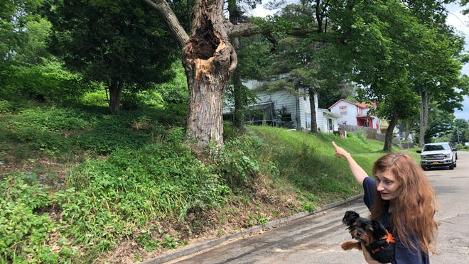 Sierra Barcomb of Hartshorn Street in Hornell points to the spot where a huge branch fell off an old oak tree Thursday morning.