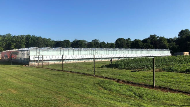 The indoor growing facility at TerrAscend in Boonton Township, where the company says it will harvest its first crop of legal marijuana in the fall. In the foreground of the indoor growing facility is an acre of vegetables being grown on the property to donate to a local food bank. August 4, 2020.