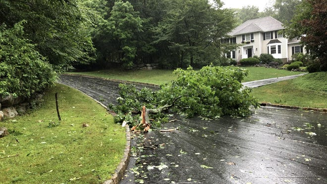 Elora Drive in Sparta is blocked by a downed tree Tuesday.