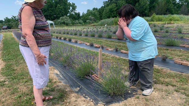 Clarissa Drouhard, 32, of Rootstown, smells the lavender on her hands. Her mother Donna, 71, brought Clarissa and her older brother Mathias, 37, and niece Victoria, 10, to Lavender Trails on Wednesday after learning about it through the group The Up Side of Downs of Northeast Ohio.