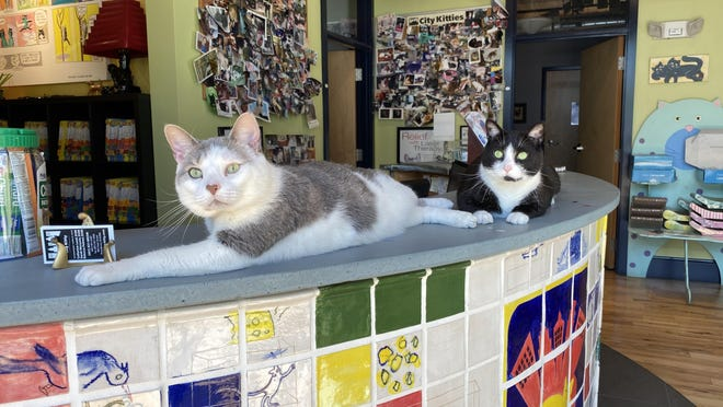 Walter, left, and Stanley at City Kitty Veterinary Care for Cats.