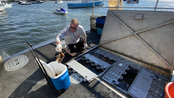 Ken Roth's first mate loads lobsters into a waiting customer's cooler in Green Harbor in Marshfield on Saturday, June 20, 2020.