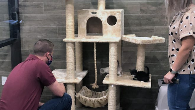 A volunteer shows off the kitty play condo and its occupants at the Sherman Animal Shelter in 2020. The city of Sherman has approved a new series of ordinances for animals and pets within the city.