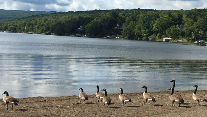 Limiting shoreline erosion on Honeoye Lake the right way can help improve its overall health.