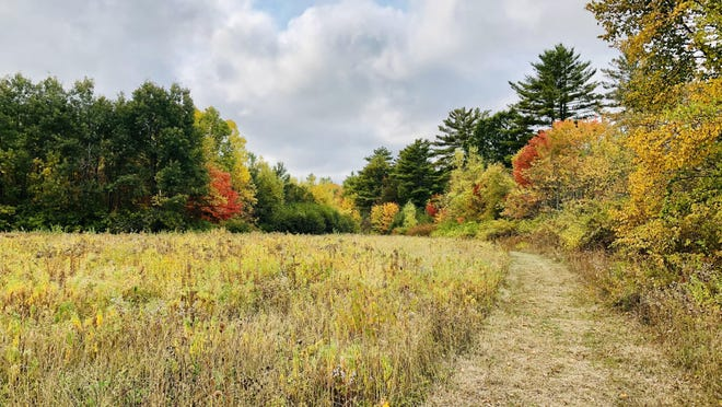 Kennebunk Land Trust will host an October Wellness Walk on Sunday, Oct. 25 at 11 a.m. at the For All Forever Preserve, an 111-acre property which contains forest, wetland areas, beautiful fields, and a mile of frontage on the Mousam River.