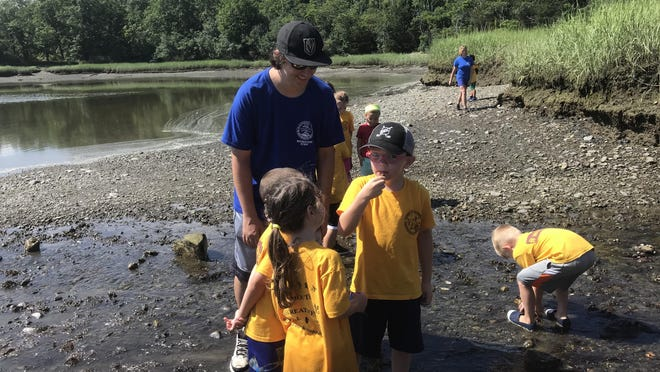 Weymouth Recreation Division junior counselor Sam Barrett guides children in the Rovers program while searching for crabs near the shoreline of the Back River in Great Esker Park in July 2019. [Wicked Local File Photo]