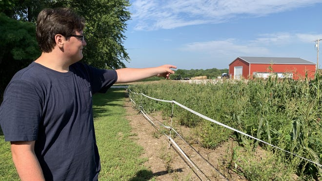 FFA Reporter, junior Bo Johnson came before school began to help with garden harvest. Some of the sweetcorn was knocked down in the derecho Aug. 10.
