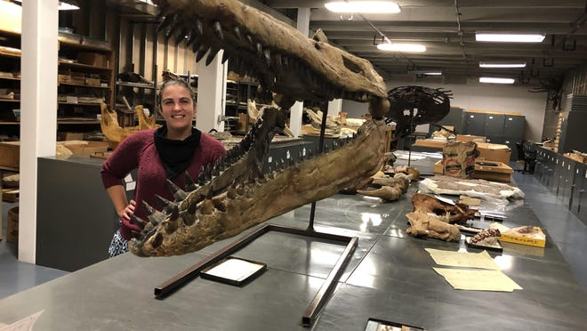 Sternberg's Aly Baumgartner, paleontology collections manager, stands beside the skull of a megacephalosaurus in the ground-floor storage area of the museum.