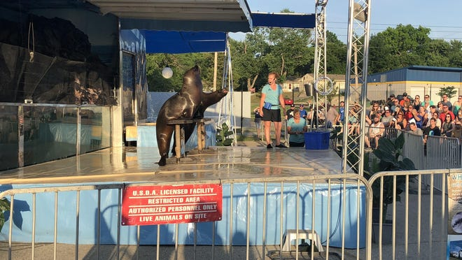 Stella and Kitty, two sea lions at the Topeka Zoo, perform in 2018 during Brew at the Zoo, an annual fundraiser hosted by Friends of the Topeka Zoo.