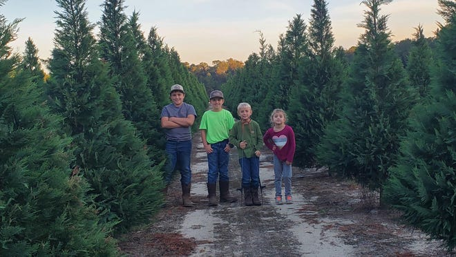 Kelly and Brad Rahn's children have been a big help on the family's new Christmas tree farm in Springfield. From left are: Branton, 10; Brady, 8; Baylor 7; and Kinzey, 5.
