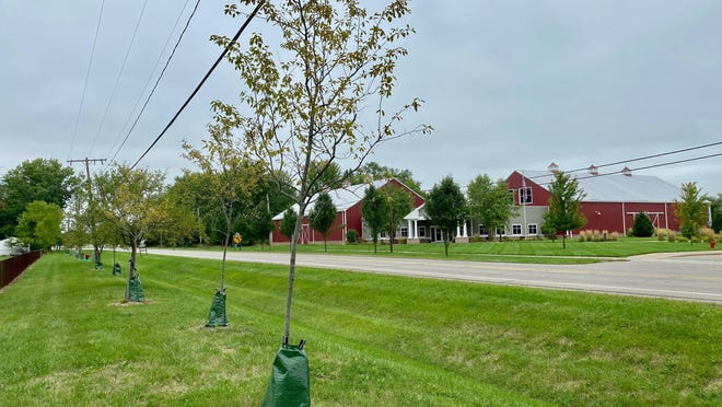 Trees planted by Re-Tree Tecumseh are pictured Thursday along North Evans Street in Tecumseh. A donation from TLC Community Credit Union will help Re-Tree Tecumseh plant 75 more trees along North Evans Street this fall.