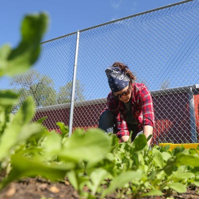 Jenny Quiner harvests lettuce at the Dogpatch Urban