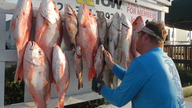 Red snapper anglers in Mississippi will have an increased opportunity to fish in 2016.
