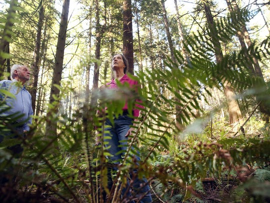 Jane Stone, executive director of the Bainbridge Island Land Trust, stands among the ferns on a trail in the Jablonko Perserve near Gazzam Lake. With her is David Harrison, one of the leaders of BILT's capital campaign.