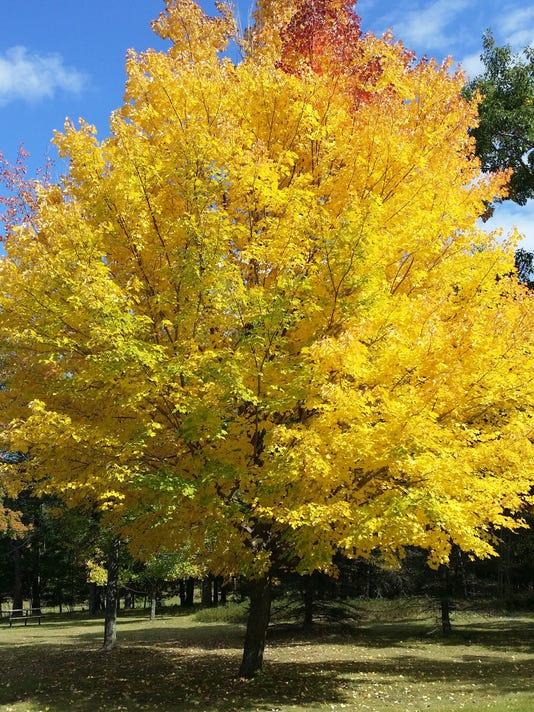 Fall color Iron Mountain Michigan Sept..jpg