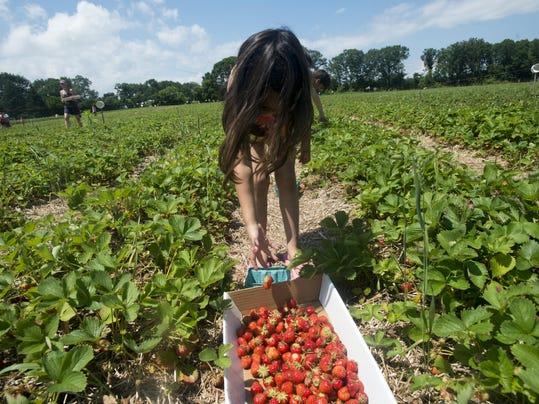 BUR 0630 strawberries C1