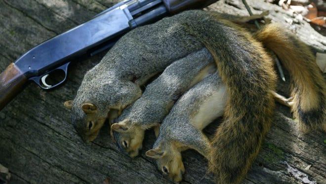 Missouri's squirrel hunting season opens on May 23.