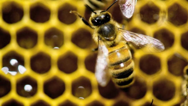Hoping to reverse America's declining honeybee and monarch butterfly populations, agencies around the country are enacting pollinator protection plans and enlisting the help of stakeholders to make lands more bee-friendly.