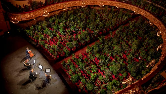 """Musicians rehearse at the Gran Teatre del Liceu in Barcelona, Spain, Monday, June 22, 2020. The Gran Teatre del Liceu reopens its doors, in which the 2,292 seats of the auditorium will be occupied on this occasion by plants. It will be on 22 June, broadcast live online, when the UceLi Quartet string quartet performs Puccini's """"Crisantemi"""" for this verdant public, brought in from local nurseries."""