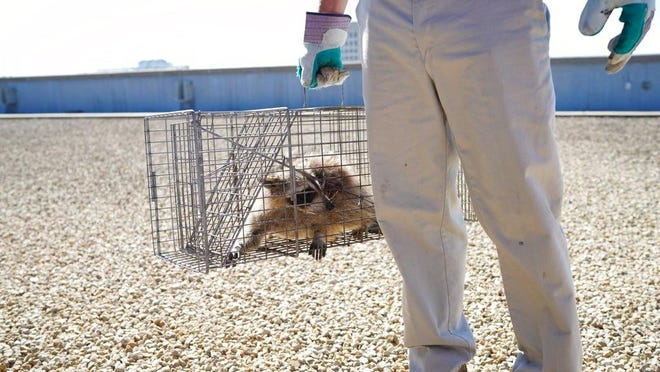 An Akron couple is suing the seller of a home they bought, the real estate agent, Realtor and others over allegations that they didn't disclose a raccoon infestation.