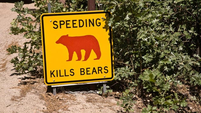 Four black bears have been struck by cars over the last few weeks in Yosemite National Park. Two died, and it is unclear whether the others did as well.