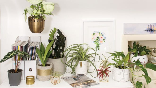 A small collection of house plants, including several air plants, snake plants and others