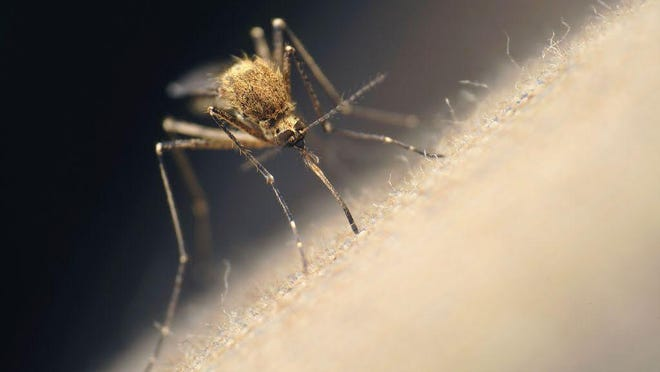 An Ottawa County resident has tested positive for Jamestown Canyon virus, the first confirmed human case of a mosquito-borne disease in the state in 2020.