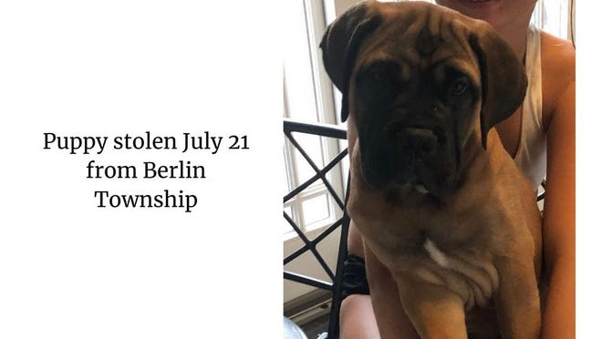 Puppy that was stolen July 21 in Monroe County.