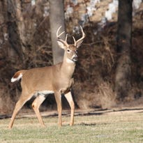 Democratic lawmakers have met and made proposals to Gov. Scott Walker's staff about measures to control chronic wasting disease.
