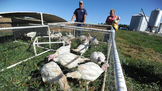 Russ and Mendy Sellman raise turkeys for Thanksgiving on their farm outside Galion.