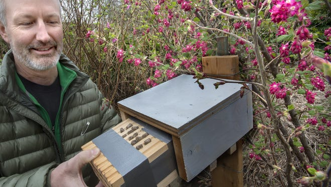 Wally Croshaw inserts the Mason bee house into an enclosure to protect the bees from the weather on Monday, March 20, 2017 in Tacoma, Wash.