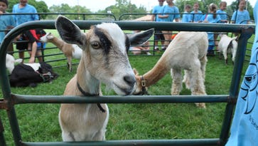 Pompton Lakes modifies farm animal regulations