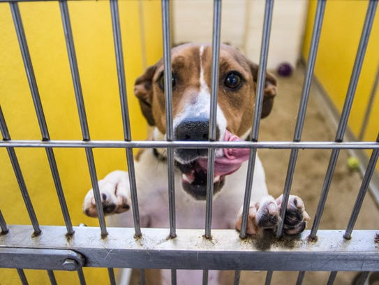 Dogs and cats are available for adoption from HELP