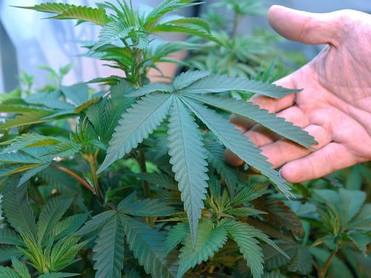 636101577230149846-Marijuana-Zoning-Davi.jpg